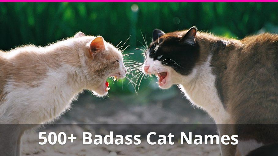 badass cat names