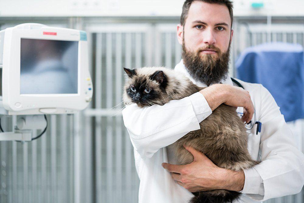 bearded vet holding a cat