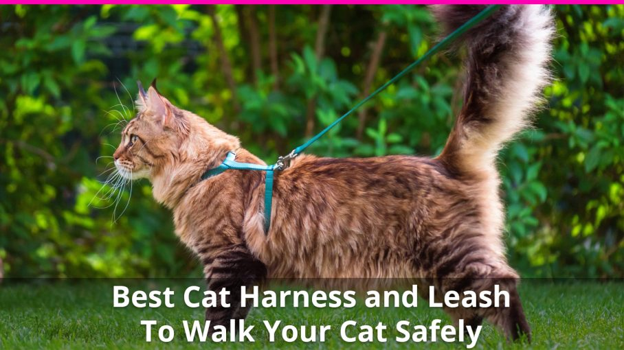 best cat harness and leash
