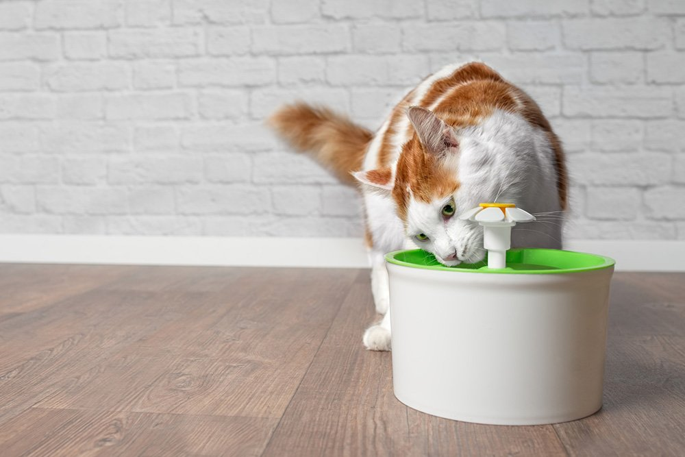 cat drinking from catit flower fountain