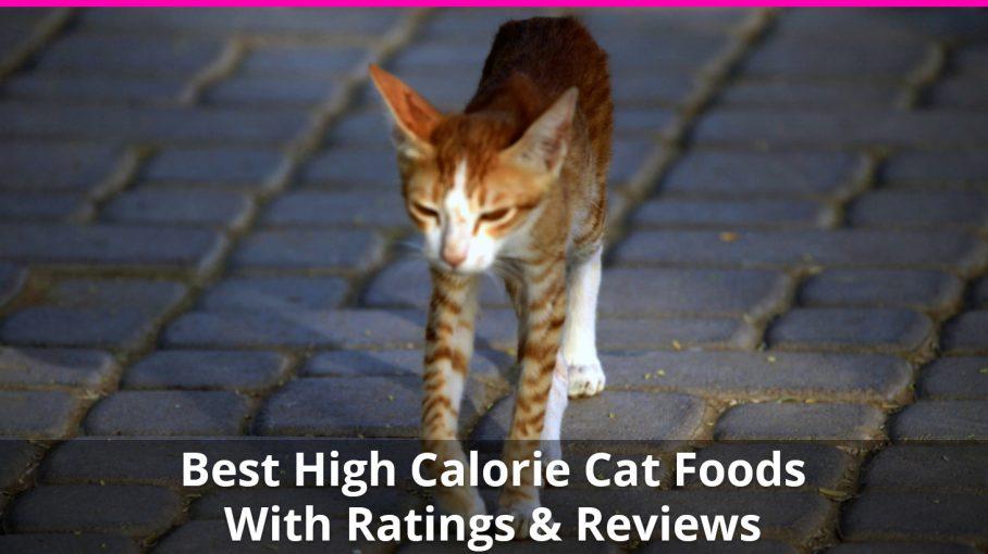 high calorie cat food