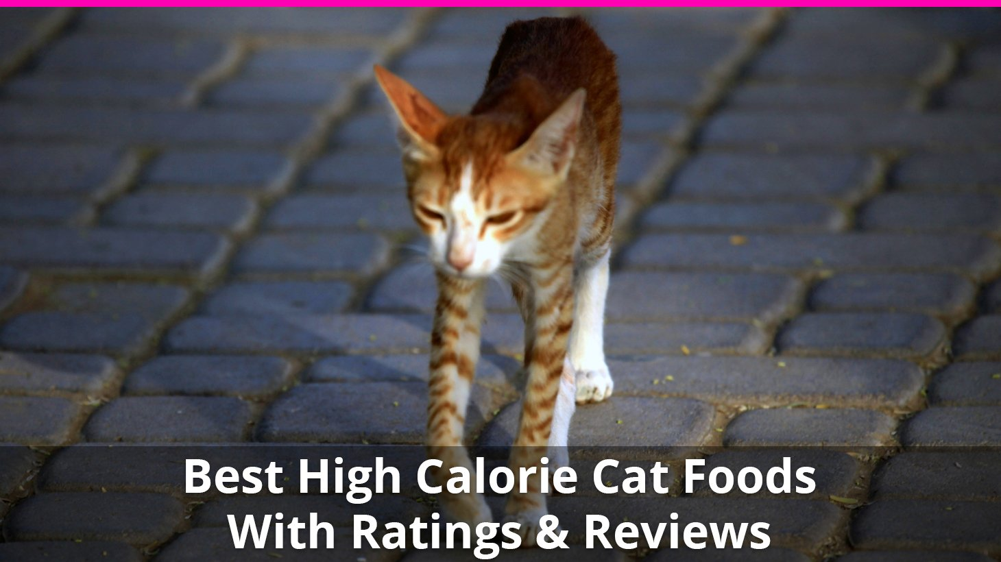 Best High Calorie Cat Food For Weight Gain Wet And Dry