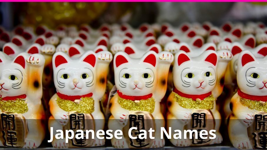 Best 250+ Japanese Cat Names (+ Meanings) For Male And