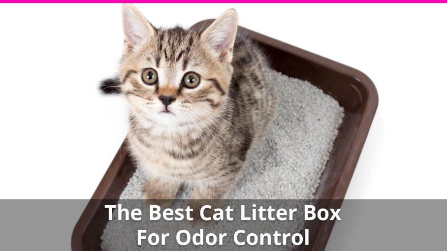 best cat litter box for odor control