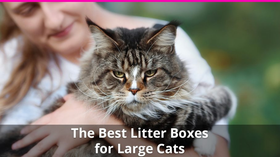 best large cat litter box