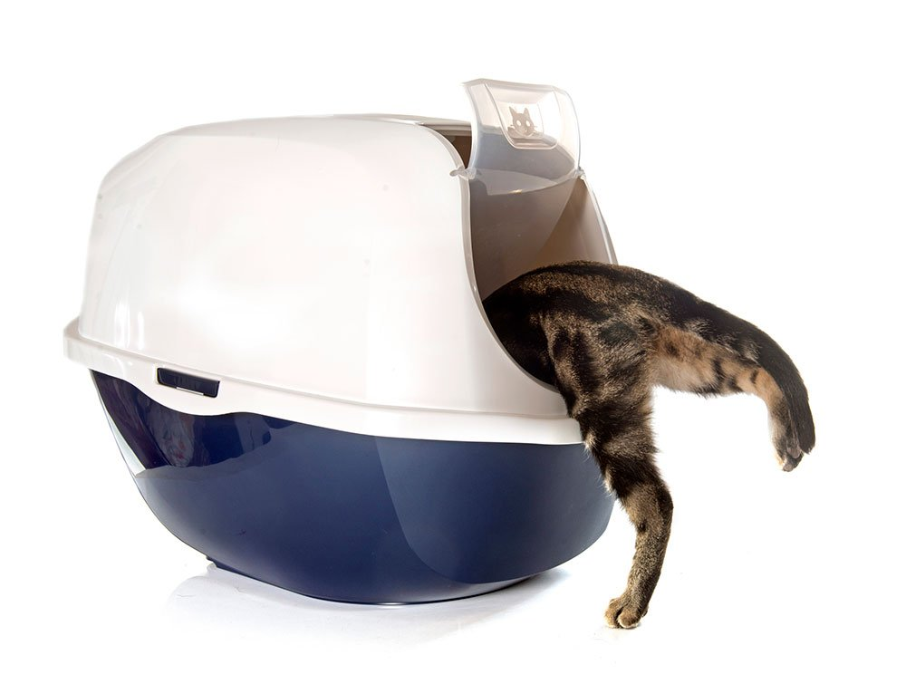cat stepping into a covered litter box