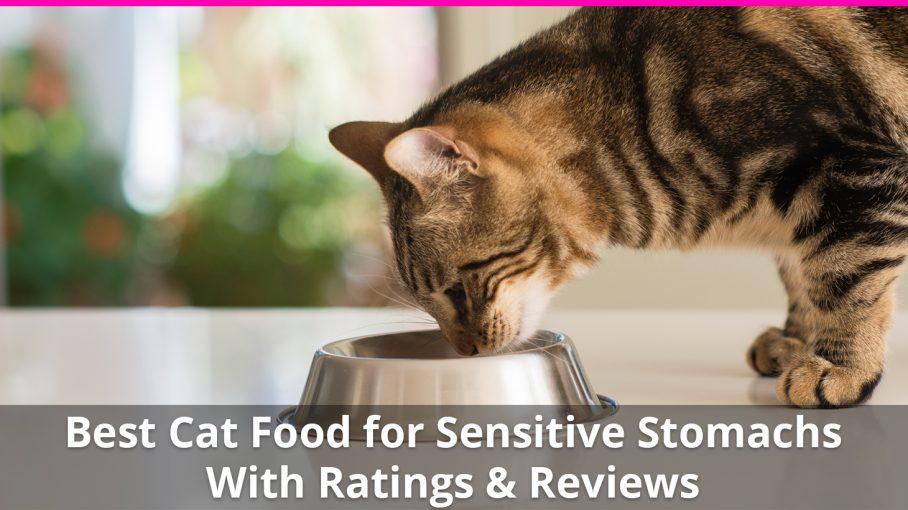 best cat food for sensitive stomachs