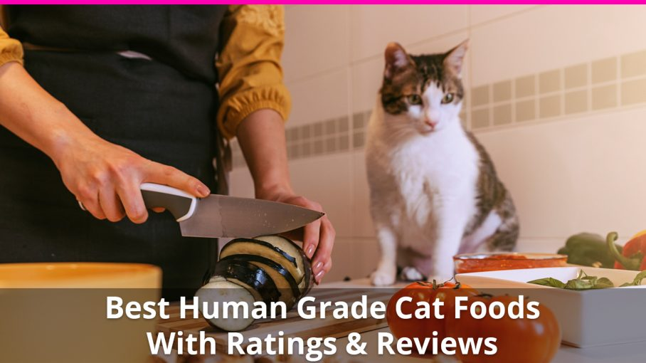 best human grade cat food
