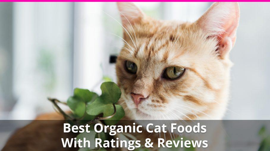 best organic cat food