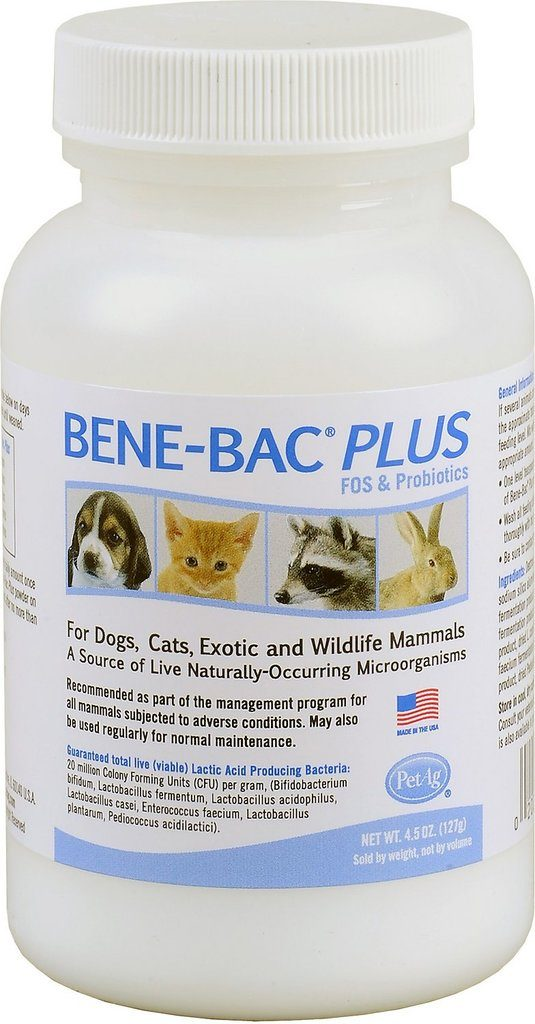 The 5 Best Probiotics For Cats With Reviews And Ratings