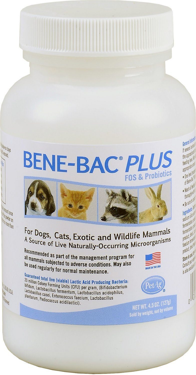 bene-bac plus probiotic for cat review