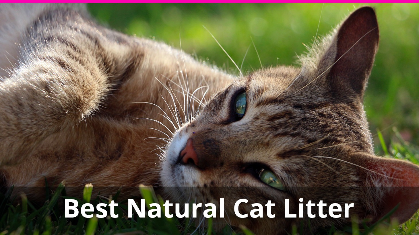 9 Best Natural Cat Litter Alternatives That Are Healthy And Safe Reviews