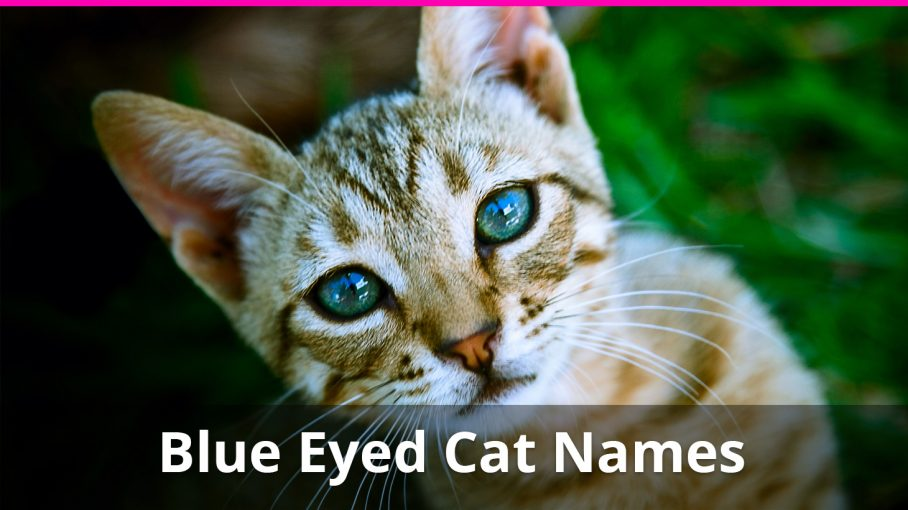 250+ of the Best Blue Eyed Cat Names For Male And Female Kitties