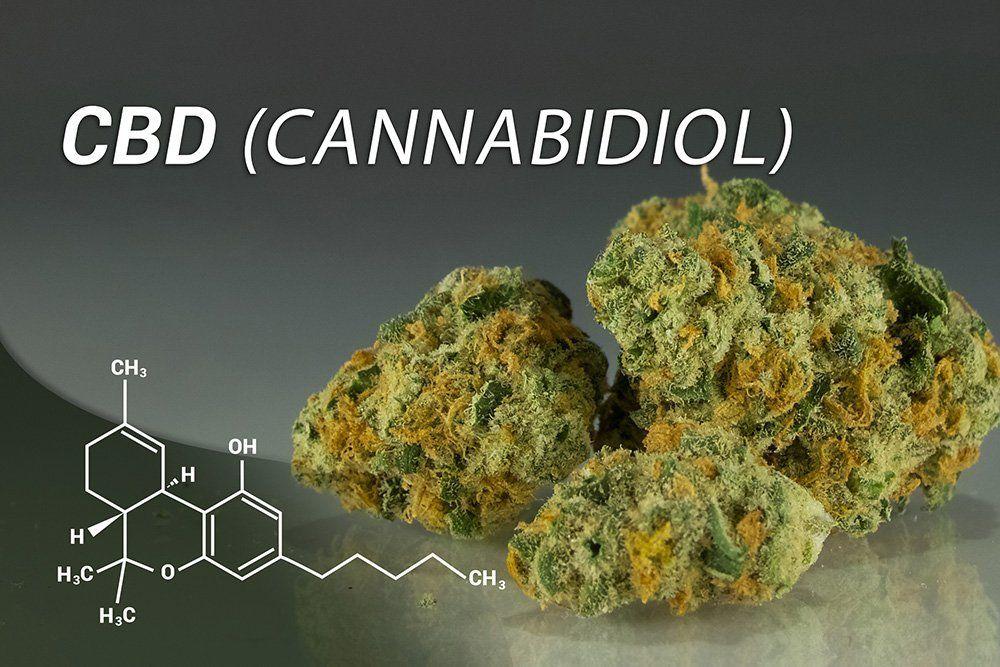 cbd cannabidiol close up science text best cbd oil for cats