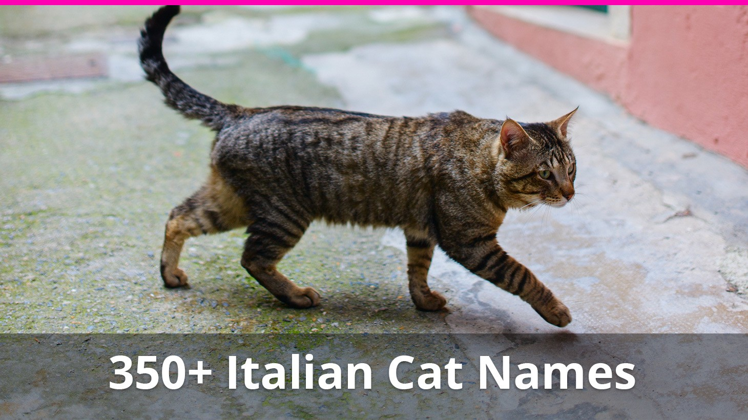 350 Italian Cat Names With Meanings For Male And Female Kitties