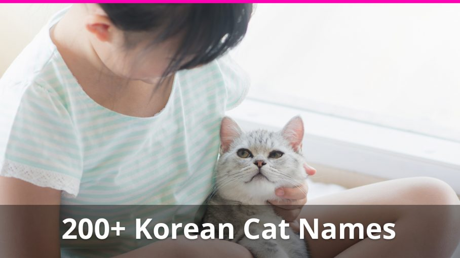 200+ Korean Cat Names (plus Meanings) For Male And Female Kitties