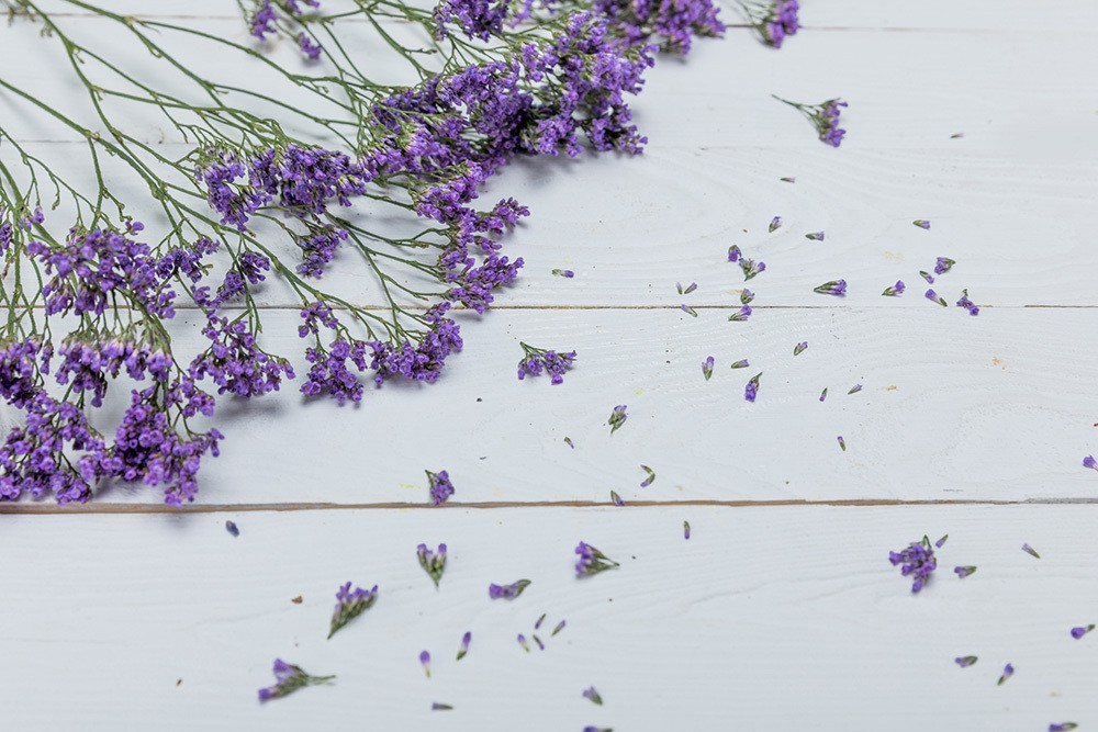 lavender for natural flea treatments