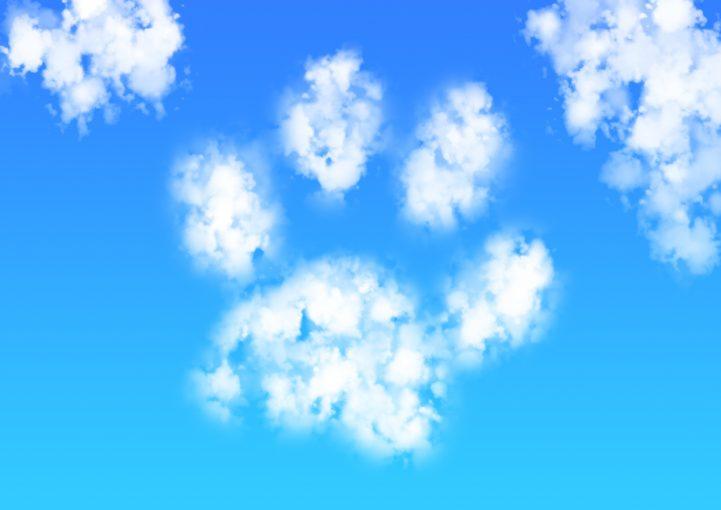 Paw Cloud