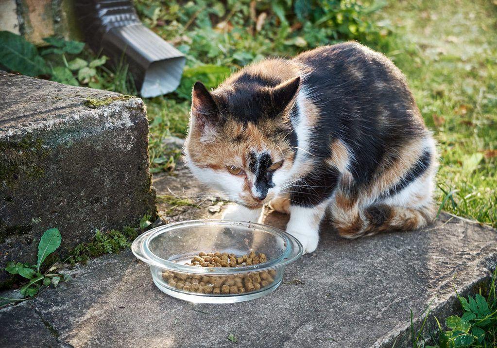 Feeding Feral Cat